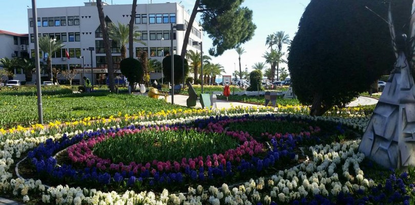 It's time for Tulips and Hyacinth in Alanya
