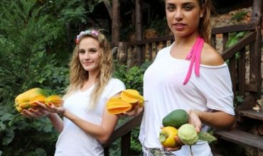 Tropical fruits in Alanya