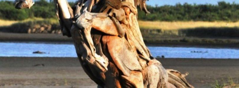 Alanyas 13´de Internationella träskulpturssymposium