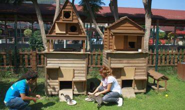 Kissat ja koirat Alanyassa