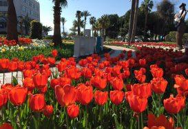Tulip fest in Alanya