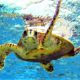 Local Guys Caretta Caretta Turtles